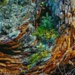 Evolution Baumstumpf   Wandbild